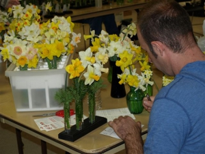 Jason staging daffodils